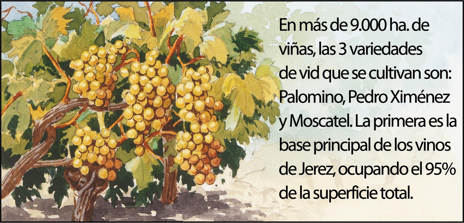 vino-jerez3-1500px