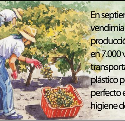 Elaboración de los vinos de Jerez