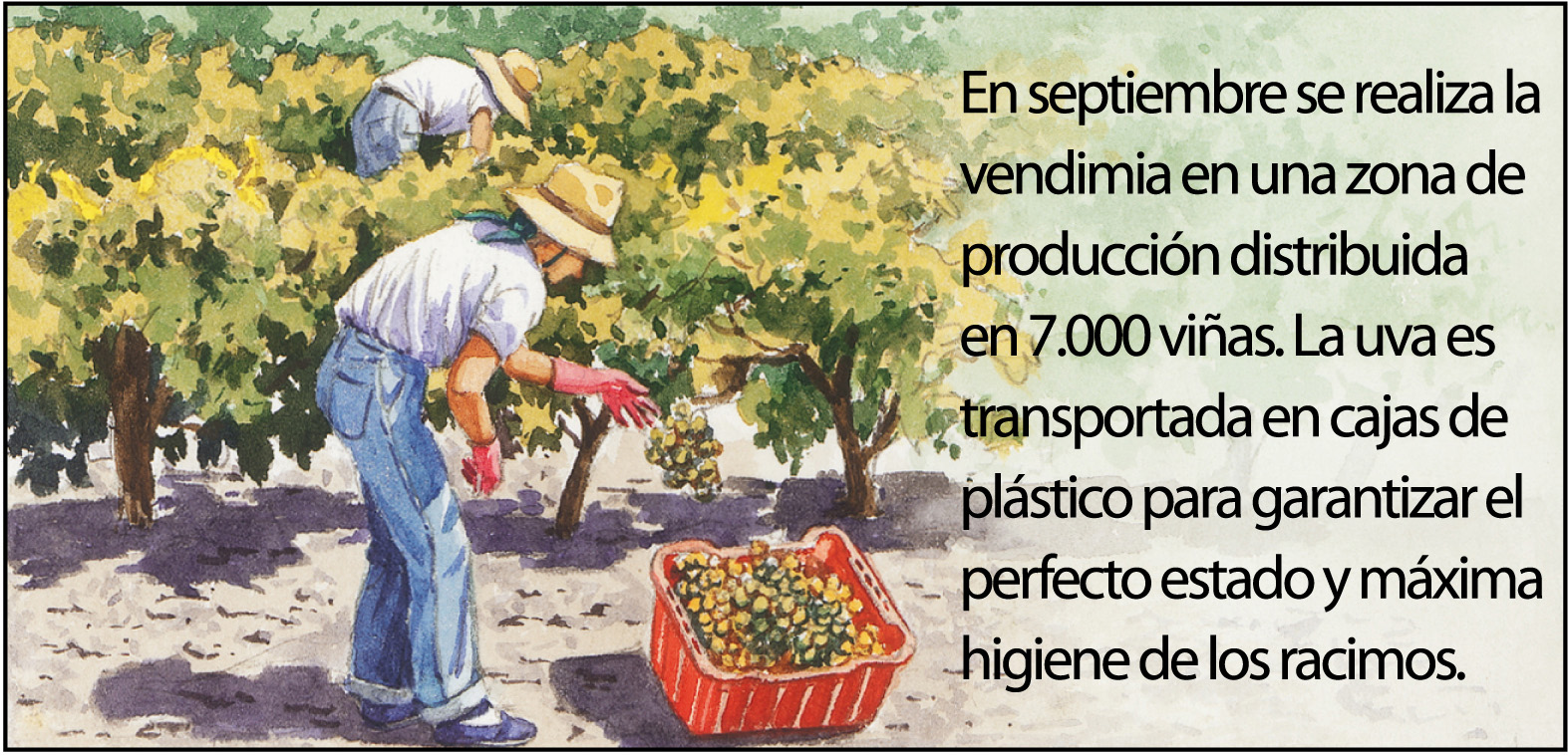 vino-jerez4-1500px